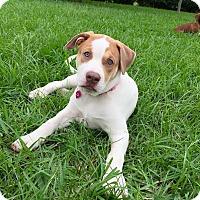 Adopt A Pet :: Vera - Homestead, FL