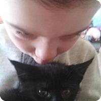 Adopt A Pet :: LA-Shifty - Devon, PA