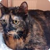 Adopt A Pet :: Wednesday - Worcester, MA