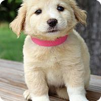 Adopt A Pet :: Inez - Waldorf, MD