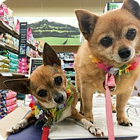 Adopt A Pet :: Li'i and Kiki - Waipahu, HI