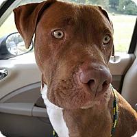Adopt A Pet :: Ethan - Ashland, KY