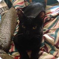 Adopt A Pet :: Bagheera - El Cajon, CA