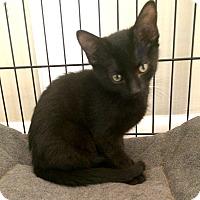 Adopt A Pet :: Donnerail - Lombard, IL