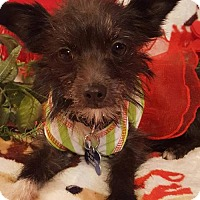 Adopt A Pet :: Mindy - Colorado Springs, CO