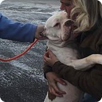 Adopt A Pet :: Titus *In training* - Woodbury, MN