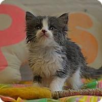 Adopt A Pet :: Jennifer Fuzzy - Brooklyn, NY
