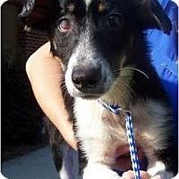 Adopt A Pet :: Angel - Okatie, SC