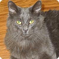 Adopt A Pet :: Ripley - Medina, OH