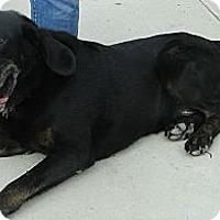 Adopt A Pet :: George - Columbus, IN