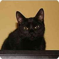 Adopt A Pet :: Crystal - Jenkintown, PA