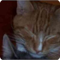 Adopt A Pet :: Pippin - El Cajon, CA