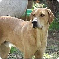 Adopt A Pet :: Gunner - Sand Springs, OK