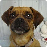 Adopt A Pet :: Lexie - Irvington, KY
