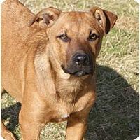 Adopt A Pet :: HANK - Glenpool, OK