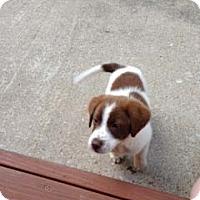 Adopt A Pet :: Willa Grace - Hazard, KY