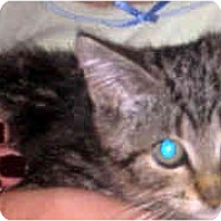 Adopt A Pet :: Sheldon - Jacksonville, FL
