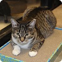 Adopt A Pet :: Mama McCoy - Plainville, MA