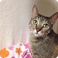 Adopt A Pet :: Raina - Foothill Ranch, CA