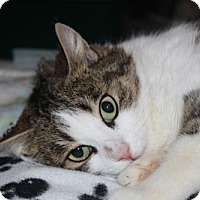 Adopt A Pet :: Cookie - Caistor Centre, ON