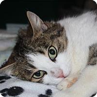 Adopt A Pet :: Cookie - Hamilton, ON