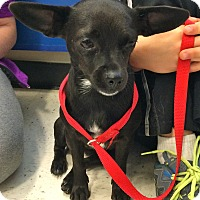 Adopt A Pet :: Gwen in CT - East Hartford, CT