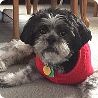 Adopt A Pet :: RILEY-pending - Eden Prairie, MN