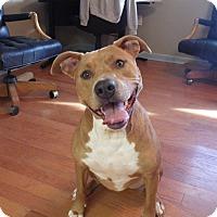 Adopt A Pet :: Jenny Lynn - Queenstown, MD
