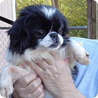 Adopt A Pet :: mookie - Crump, TN