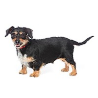 Adopt A Pet :: Mochi - Los Angeles, CA