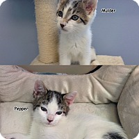 Adopt A Pet :: Mulder and Pepper - Oyster Bay, NY
