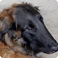 Adopt A Pet :: Gund - Lansing, MI