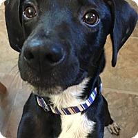 Adopt A Pet :: Sully - Franklinville, NJ