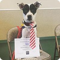 Adopt A Pet :: Ripley - Milpitas, CA
