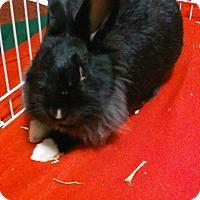 Adopt A Pet :: Willow - Moneta, VA