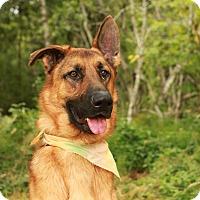 Adopt A Pet :: Klugen - Portland, OR