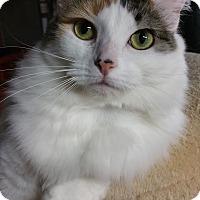 Adopt A Pet :: Sassy - Butner, NC