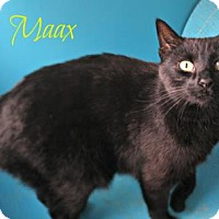 Adopt A Pet :: Maax - West Des Moines, IA