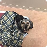 Adopt A Pet :: Teddy - Philadelphia, PA