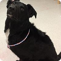 Adopt A Pet :: Cooper - Spokane, WA