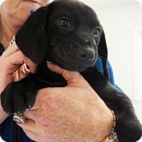 Adopt A Pet :: Fredda - Sudbury, MA