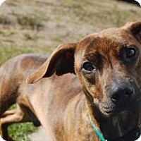 Adopt A Pet :: Stryker - South Haven, MI