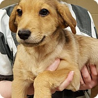 Adopt A Pet :: Granger - Staunton, VA