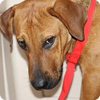 Adopt A Pet :: Murtogg - Covington, LA