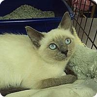 Adopt A Pet :: Tallulah - Memphis, TN
