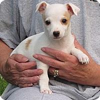 Adopt A Pet :: WESTON - Mission Viejo, CA
