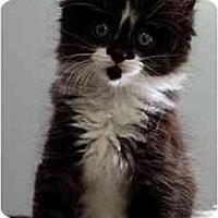 Adopt A Pet :: Ben - Portland, OR