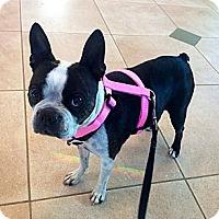 Adopt A Pet :: Miss Zoe - Temecula, CA