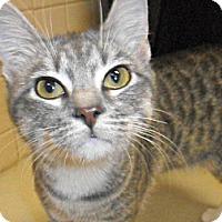 Adopt A Pet :: Lottie - white settlment, TX
