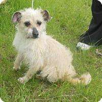 Adopt A Pet :: Suzette - Gary, IN